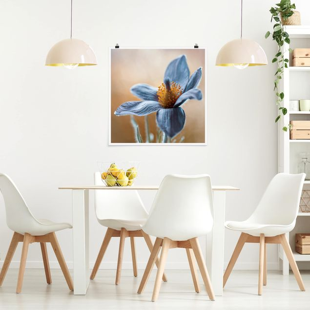 Poster - Kuhschelle in Blau - Quadrat 1:1