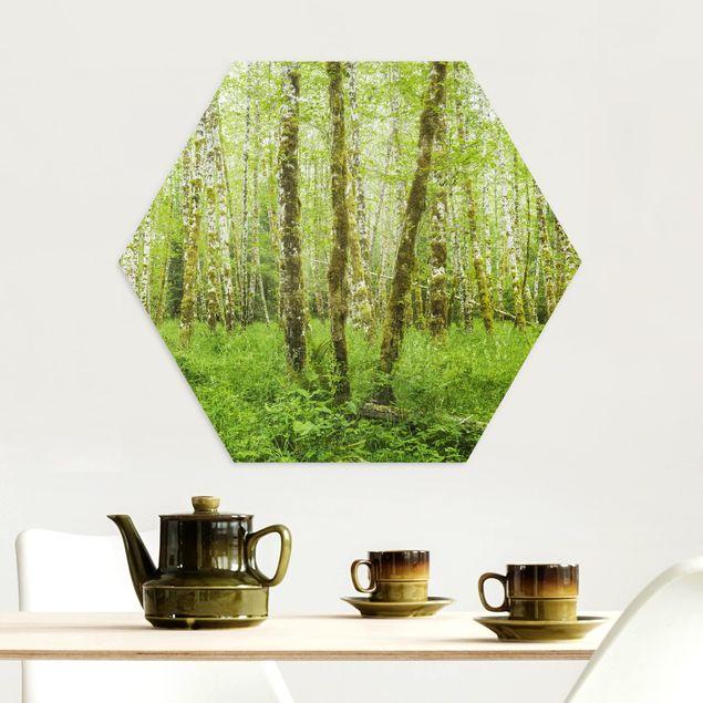 Hexagon Bild Alu-Dibond - Hoh Rainforest Olympic National Park