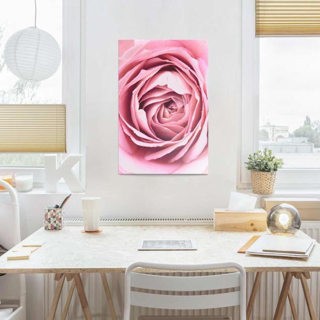 Glasbild - Rosa Rosenblüte - Hochformat 3:2