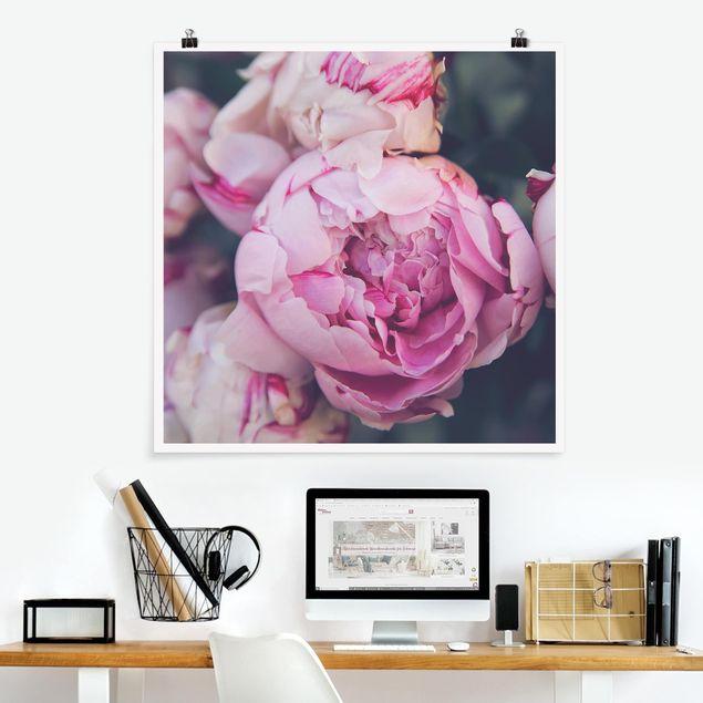 Poster - Pfingstrosenblüte Shabby - Quadrat 1:1