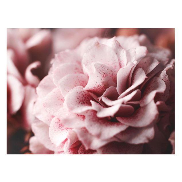 Magnettafel - Shabby Rosa Rose Pastell - Memoboard Querformat 3:4