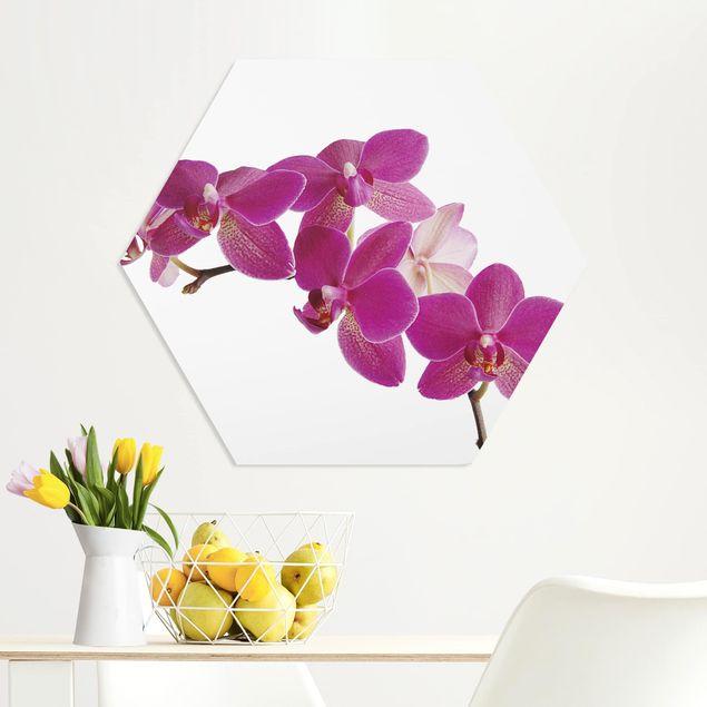 Hexagon Bild Forex - No.SB58 Orchidee II