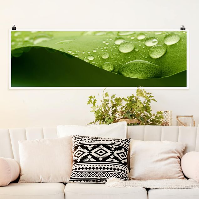 Poster - Drops of Nature - Panorama Querformat