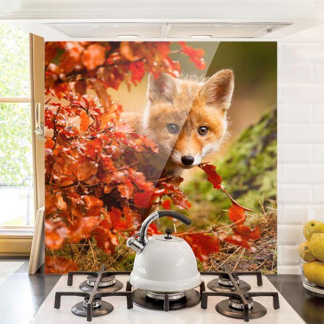 Glas Spritzschutz - Fuchs im Herbst - Quadrat - 1:1