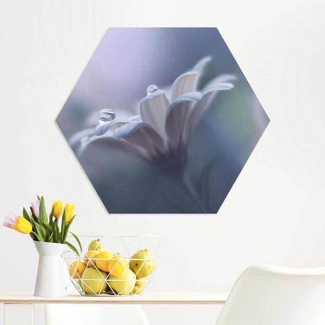 Hexagon Bild Forex - Behind Closed Eyes