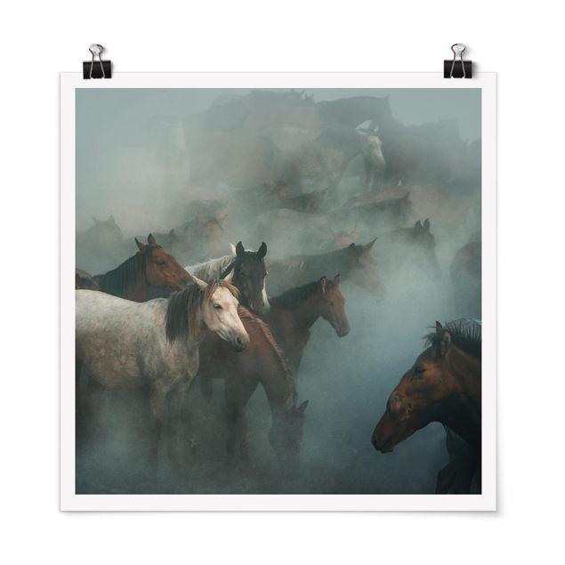 Poster - Wilde Pferde - Quadrat 1:1