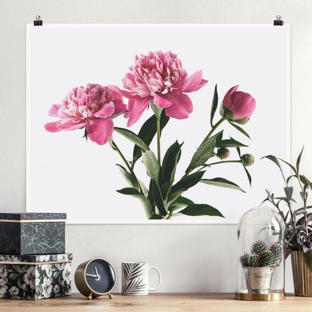 Poster - Blüten und Knospen Pink auf Weiß - Querformat 3:4