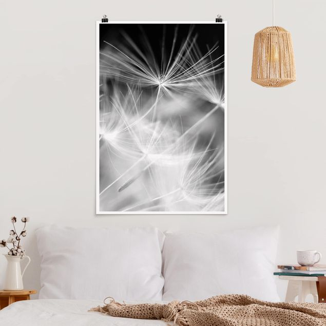 Poster - Bewegte Pusteblumen Nahaufnahme auf schwarzem Hintergrund - Hochformat 3:2
