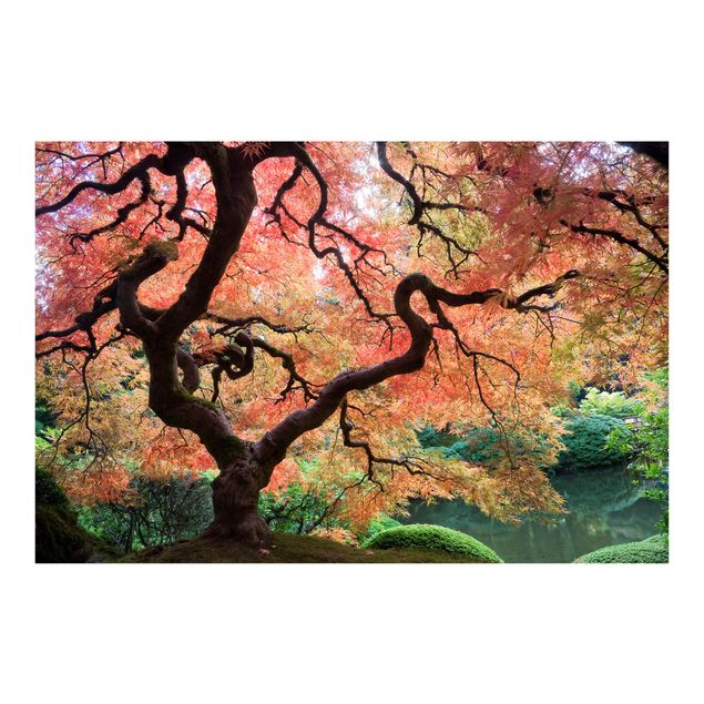 Fototapete Japanischer Garten