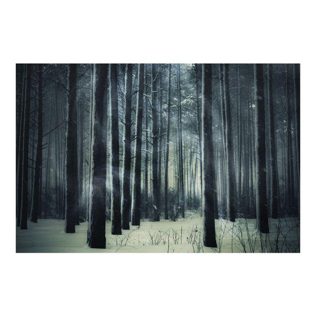 Fototapete Mystischer Winterwald