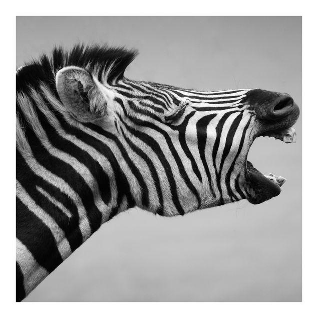 Fototapete Brüllendes Zebra II