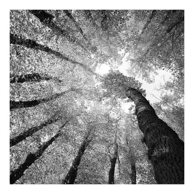 Fototapete Bäume des Lebens II