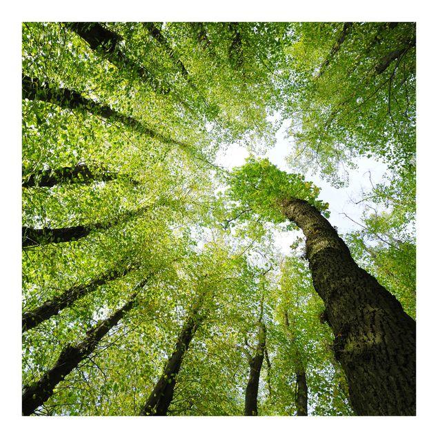 Fototapete Bäume des Lebens