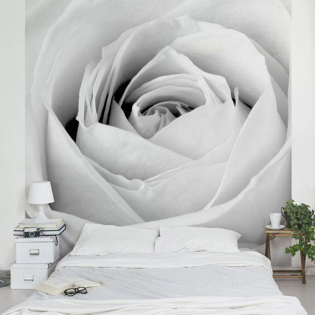 Fototapete Close Up Rose