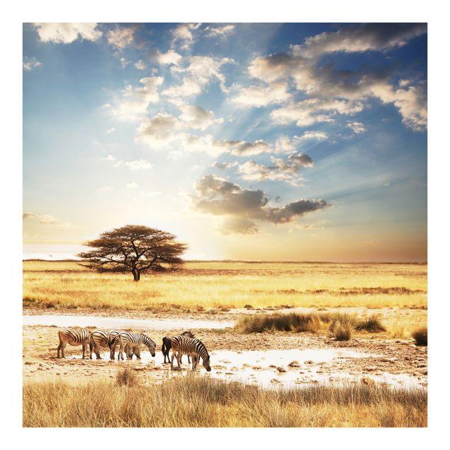 Fototapete Das Leben der Zebras