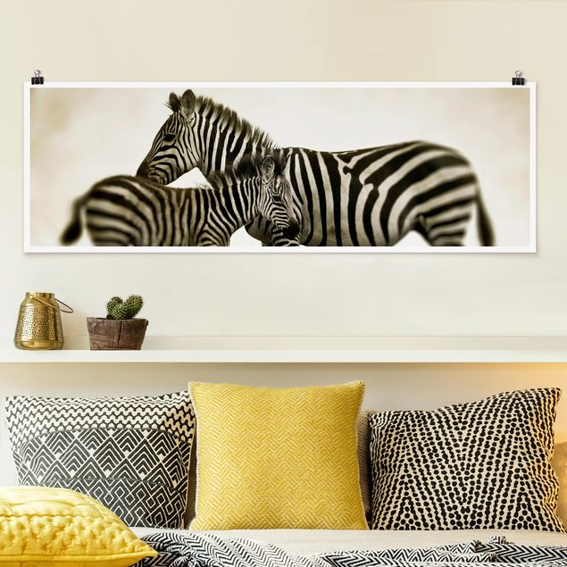 Poster - Zebrapaar - Panorama Querformat