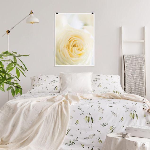 Poster - White Rose - Hochformat 3:4