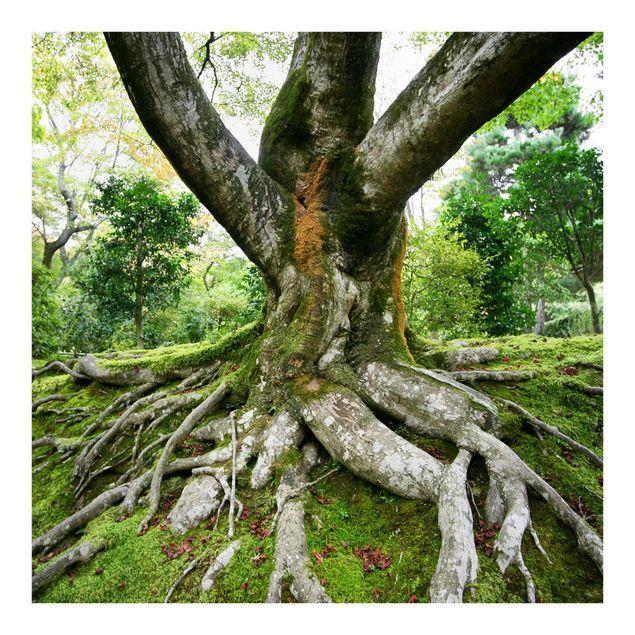 Fototapete Alter Baum