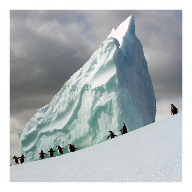 Fototapete Arctic Penguins