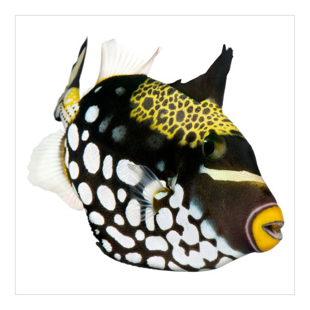 Fototapete Clown Triggerfish Set