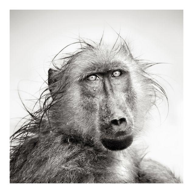 Fototapete Crying Baboon