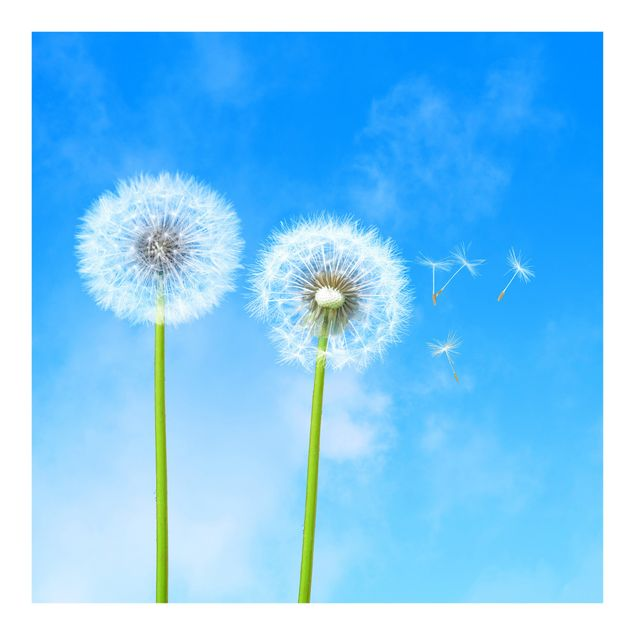 Fototapete Flying Seeds