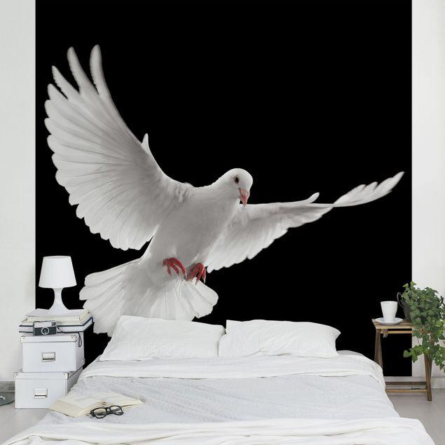 Fototapete Friedenstaube
