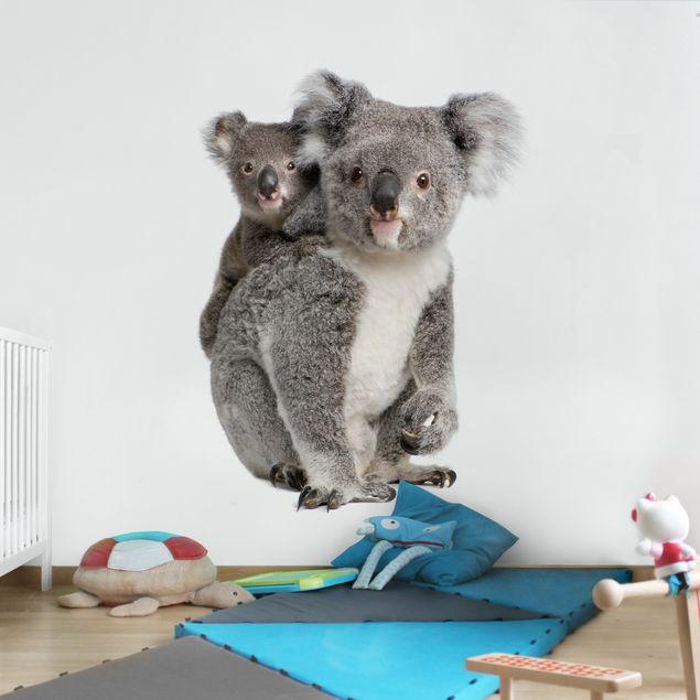 Fototapete Koalabären