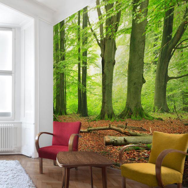 Fototapete Mighty Beech Trees