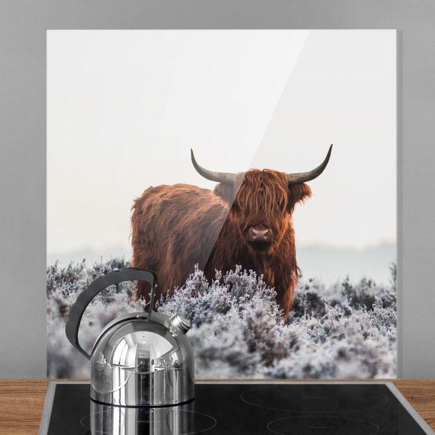 Glas Spritzschutz - Bison in den Highlands - Quadrat - 1:1