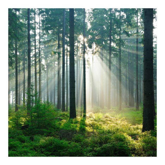 Fototapete Enlightened Forest