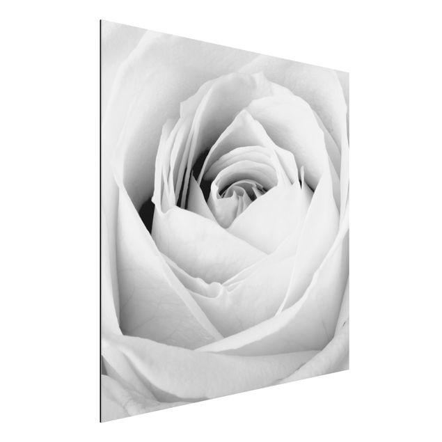 Alu-Dibond Bild - Close Up Rose