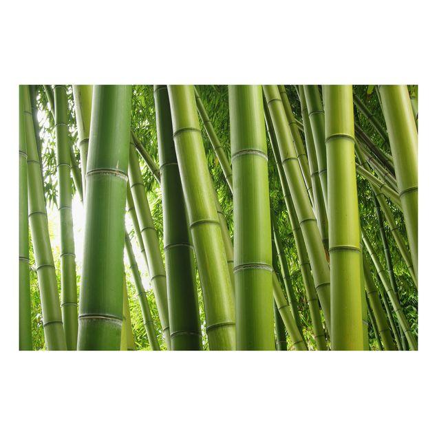 Alu-Dibond Bild - Bamboo Trees No.1