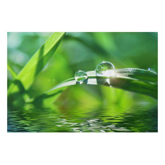 Alu-Dibond Bild - Green Ambiance II