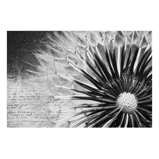 Alu-Dibond Bild - Pusteblume Schwarz & Weiß