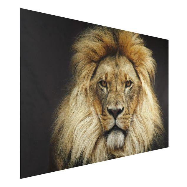 Alu-Dibond Bild - Wisdom of Lion