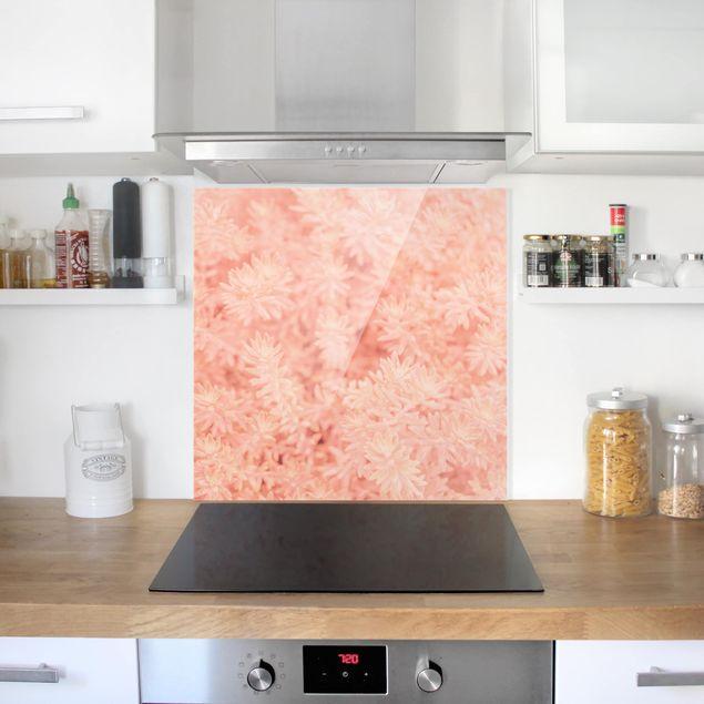 Glas Spritzschutz - Rosmarin Rosa - Quadrat - 1:1