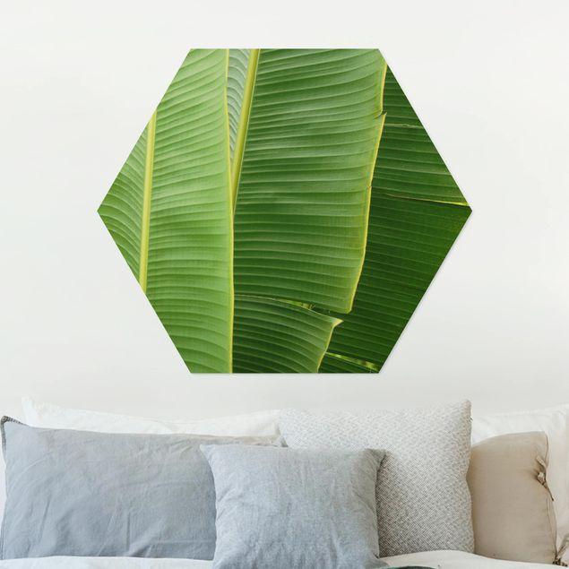 Hexagon Bild Alu-Dibond - Banana Leaves