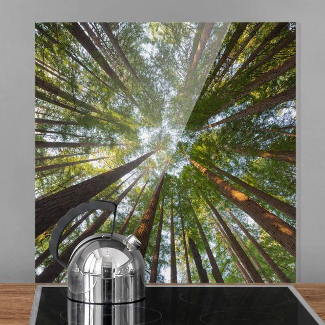 Glas Spritzschutz - Mammutbaum Baumkronen - Quadrat - 1:1