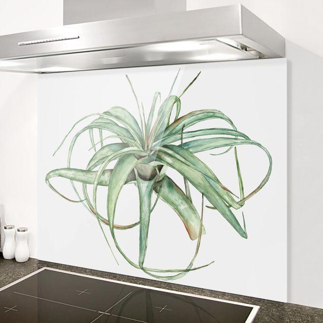 Glas Spritzschutz - Luftpflanze Aquarell I - Querformat - 4:3