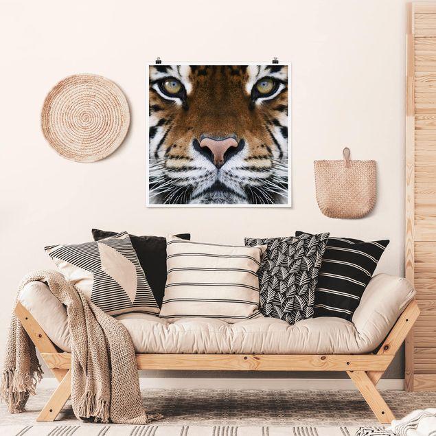 Poster - Tiger Eyes - Quadrat 1:1