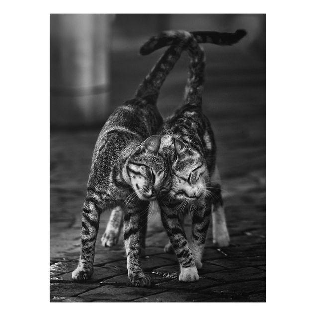 Forex Fine Art Print - Kätzchenfreundschaft - Hochformat 4:3