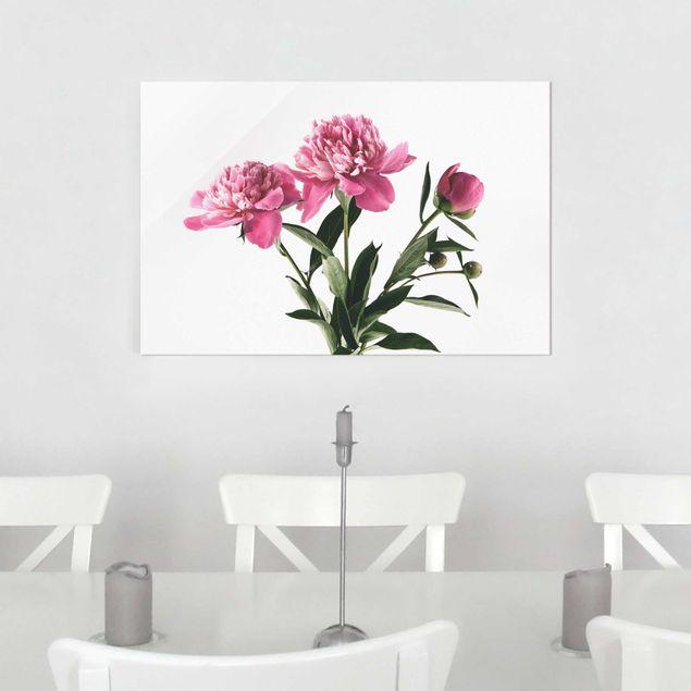 Glasbild - Blüten und Knospen Pink auf Weiß - Querformat 2:3