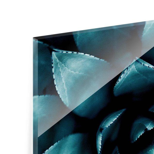 Glasbild - Sukkulente Petrol II - Quadrat 1:1