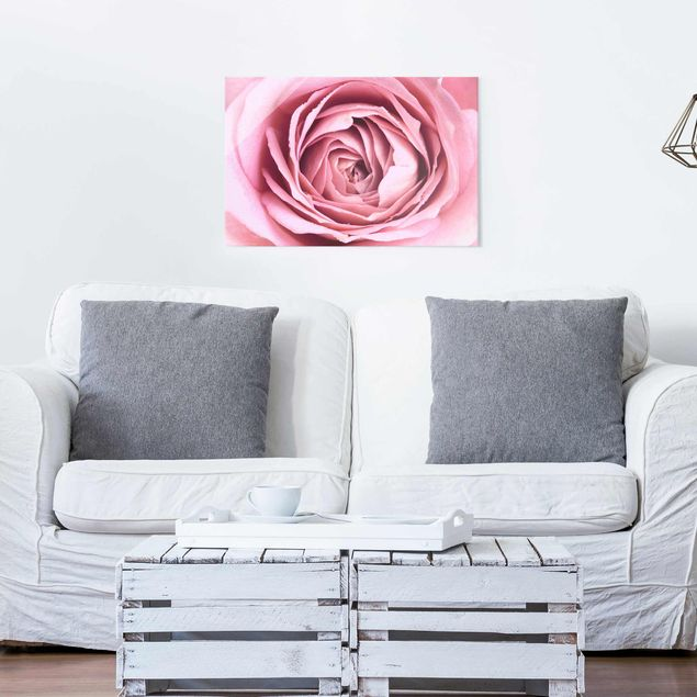 Glasbild - Rosa Rosenblüte - Querformat 2:3