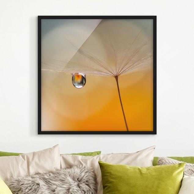 Bild mit Rahmen - Pusteblume in Orange - Quadrat 1:1