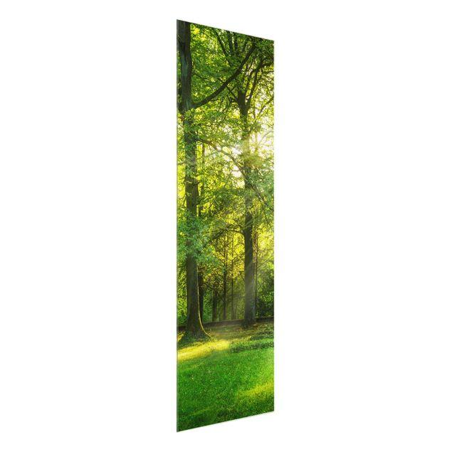 Glasbild - Spaziergang im Wald - Panel