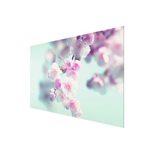 Glasbild - Farbenfrohe Kirschblüten - Querformat