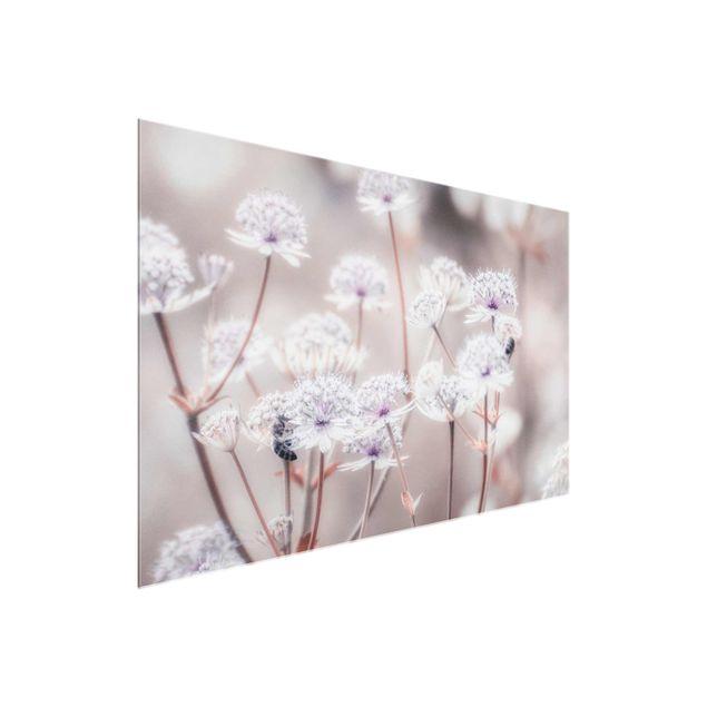 Glasbild - Federleichte Wildblumen - Querformat
