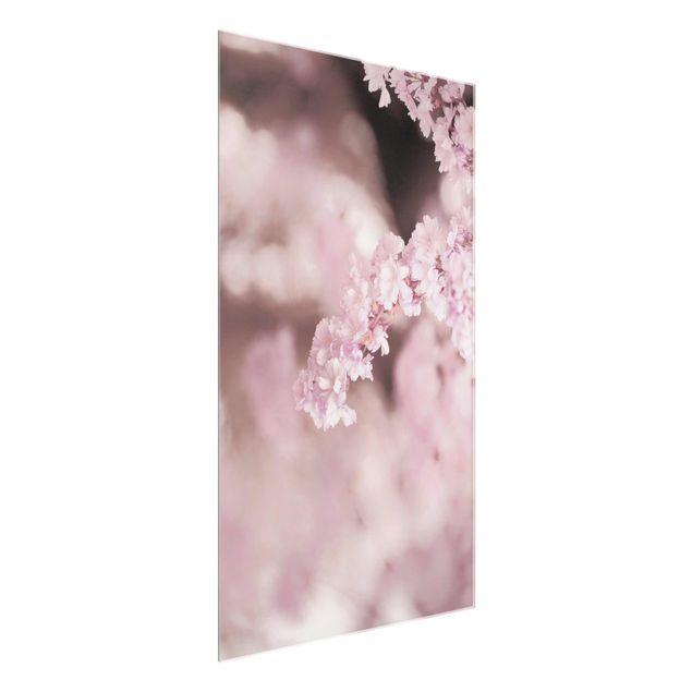 Glasbild - Kirschblüte im Violetten Licht - Hochformat
